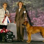 Fatiisha earns her Canadian Kennel Club Champion Status